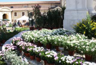 Firenze Flower Show